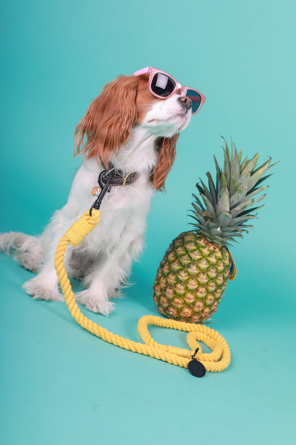 PINEAPPLE PUNCH ROPE LEASH