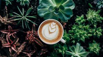Getting Grounded: How to (properly) use coffee in the garden