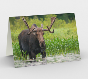 Moose card, set of 3