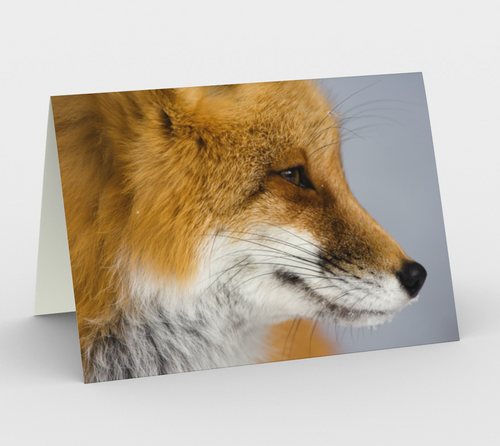 fox greeting card, set of 3