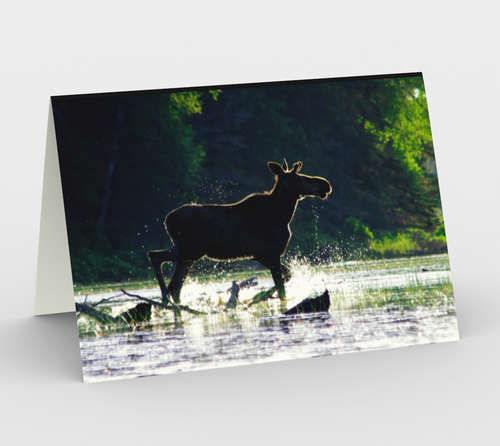 Splashy moose greeting card, set of 3