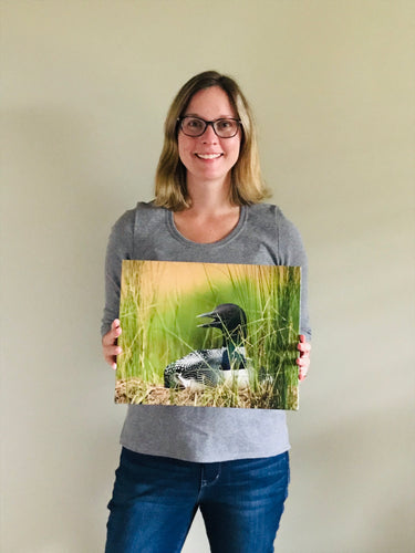 "Nesting loon 11x14"" canvas print"
