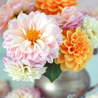 DARLING DAHLIA PAINT BY NUMBERS