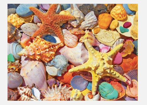 BEACH SHELLS PUZZLE
