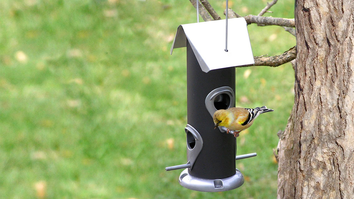 Small yellow finch at hanging black tube feeder