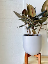 Load image into Gallery viewer, Contour Ceramic Planter with Stand