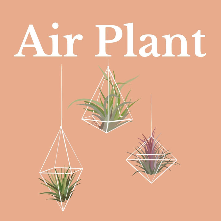 How To Make Your Plants Happy: Air Plant Care Guide | 36vine