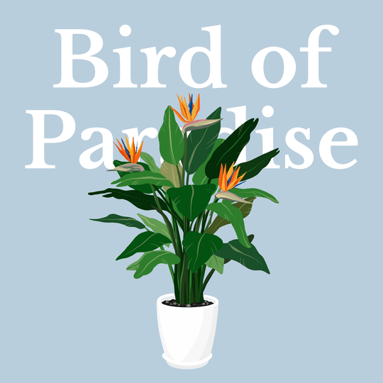 How To Make Your Plants Happy: Bird of Paradise Care Guide | 36vine