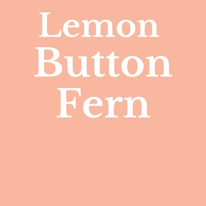 How To Make Your Plants Happy: Lemon Button Fern Care Guide | 36vine