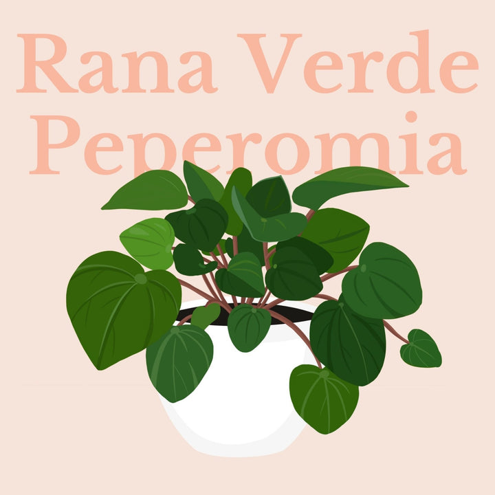 How To Make Your Plants Happy: Rana Verde Care Guide | 36vine