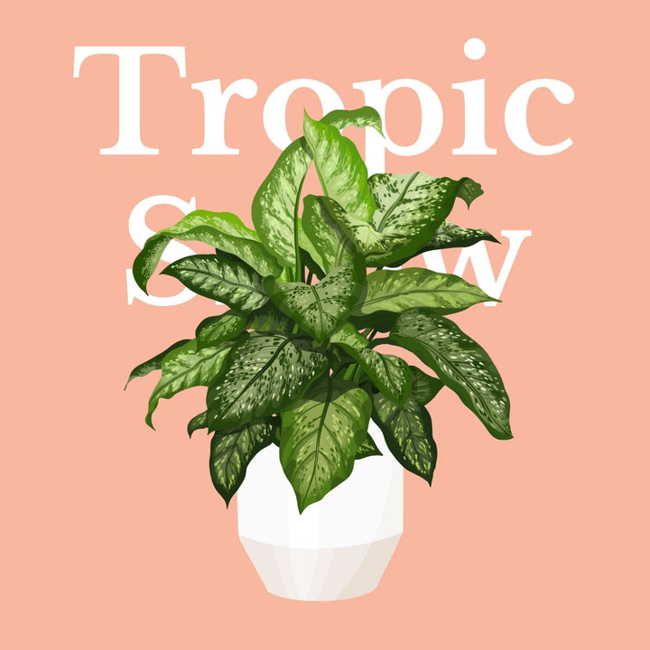 How To Make Your Plants Happy: Tropic Snow Care Guide | 36vine