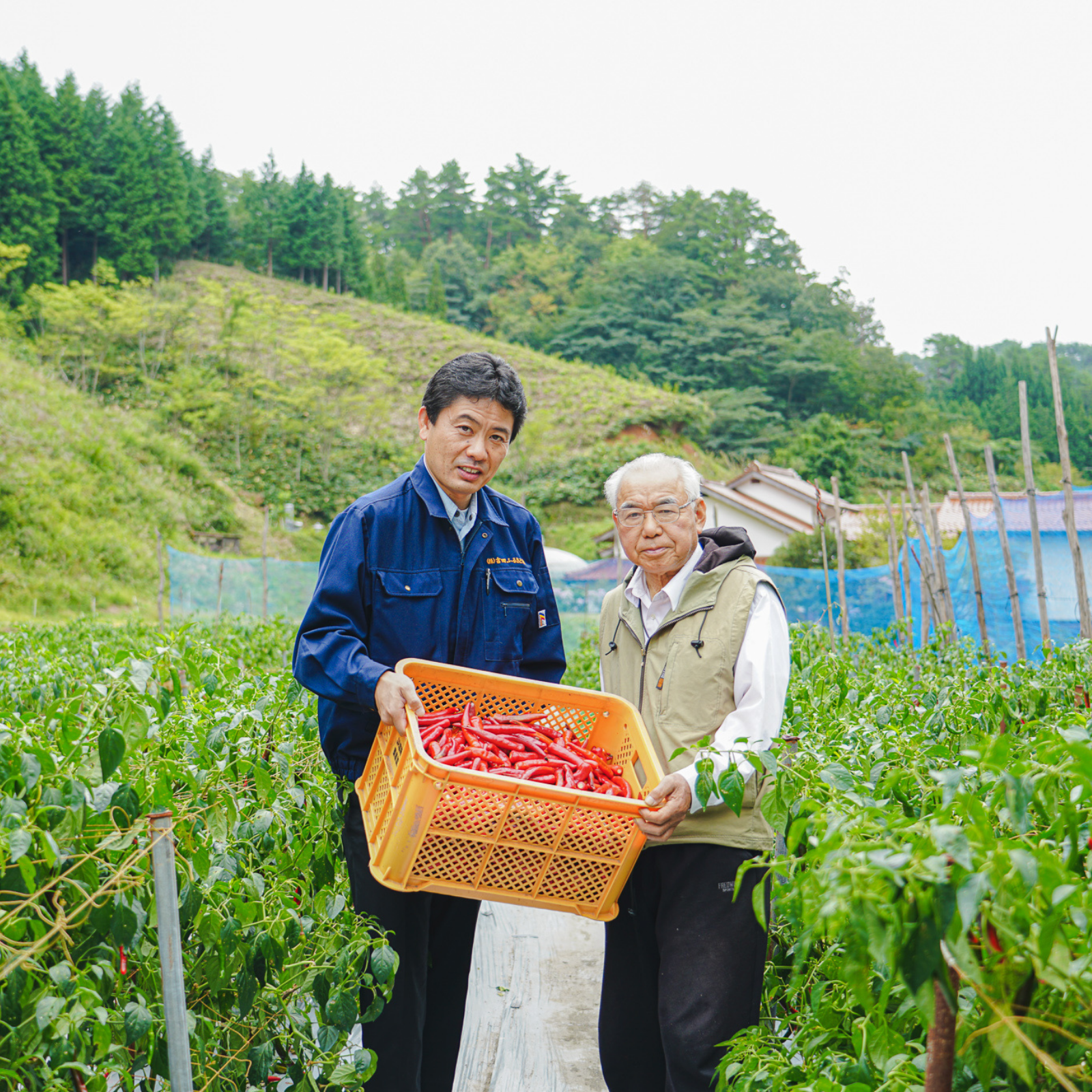 Two farmers holding bucket filled with red pepper