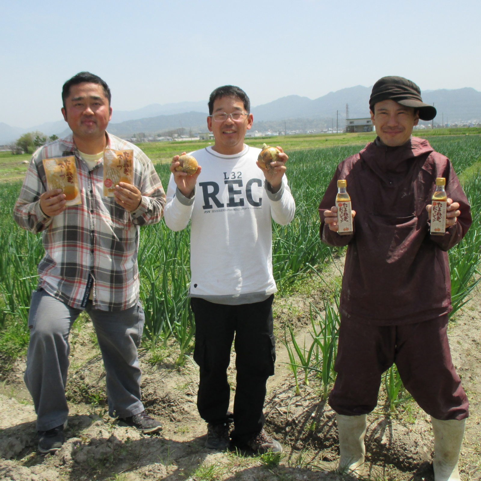 Three farmers standing in the middle of onion farm