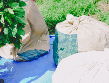 bags of mulberry leaves