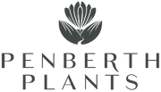 Penberth Plants