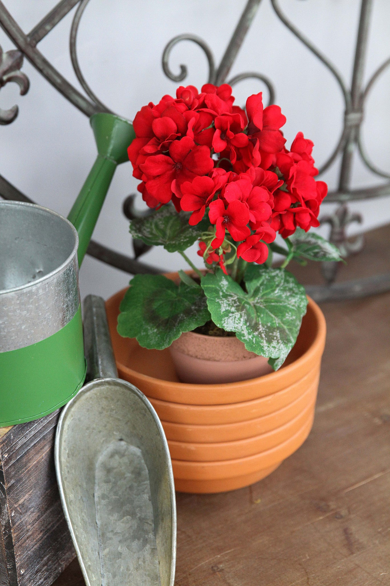 Potted Hot House Geranium