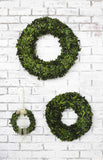 Boxwood Wreaths in 3 Sizes!