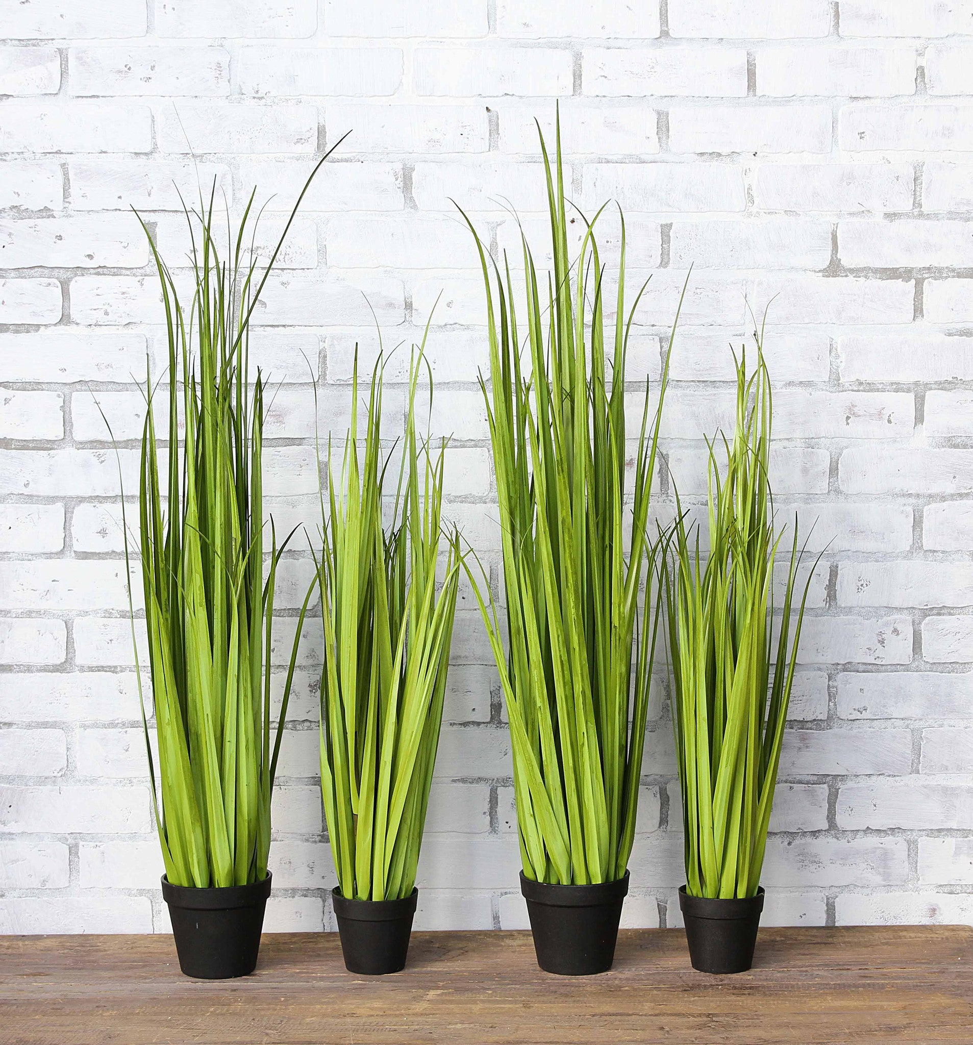 Potted Onion Grass