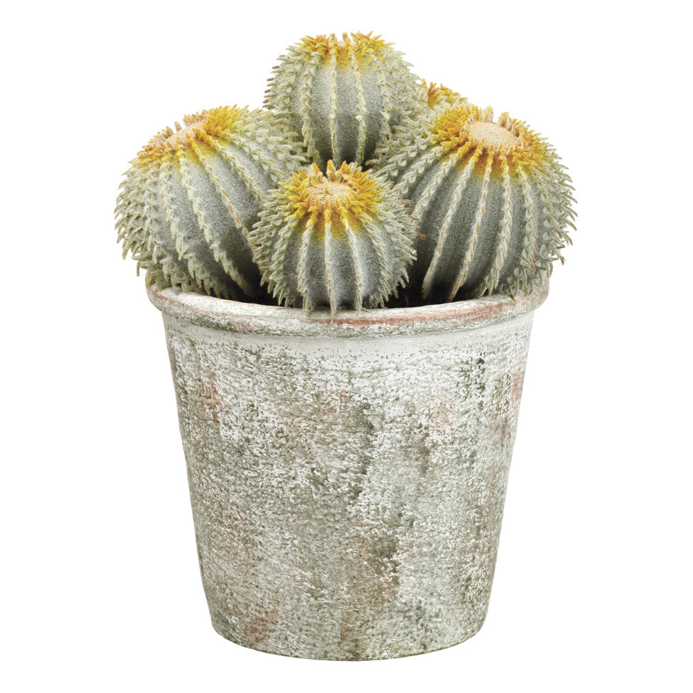 "9"" Potted Barrel Cactuses!"