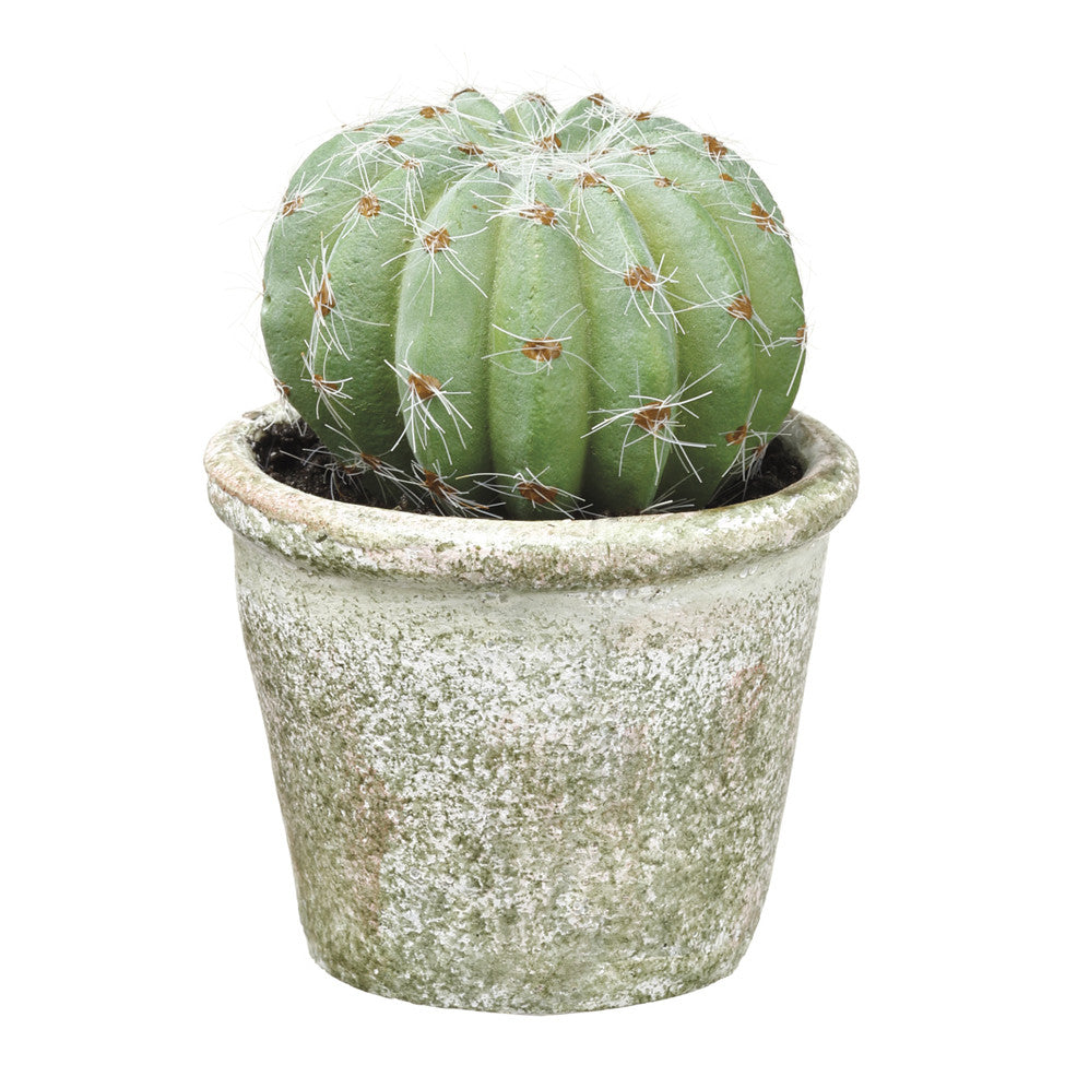 "4.25"" Potted Barrel  Cactus!"