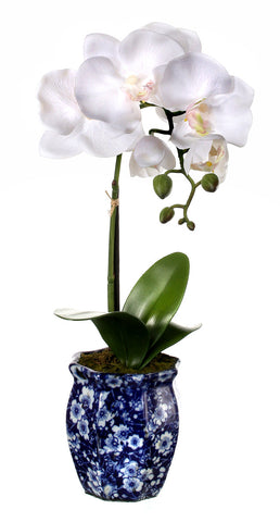 Potted Phal in Ming Jar!
