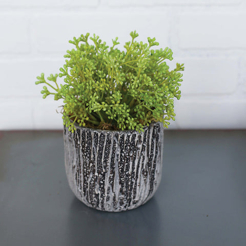 Green Succulent in Stone Container!