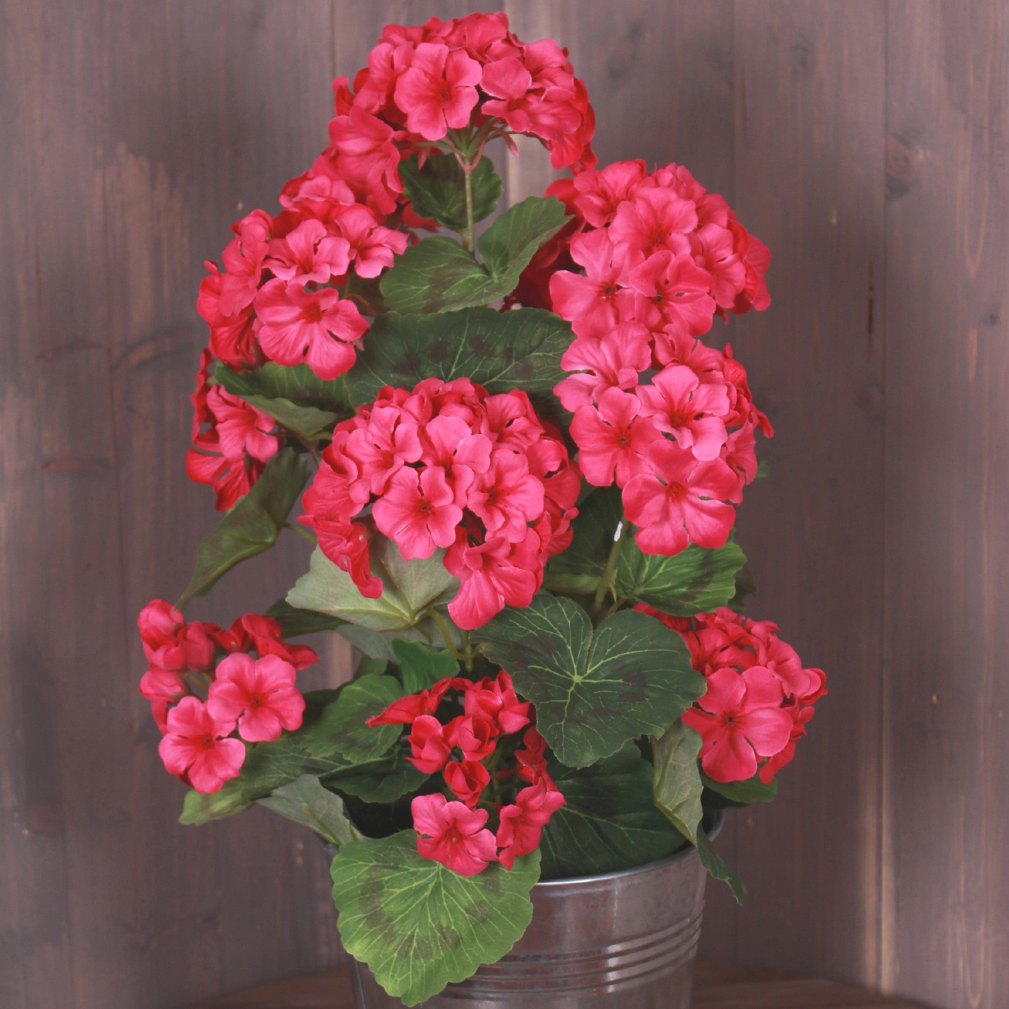 Genial Potted Geraniums!