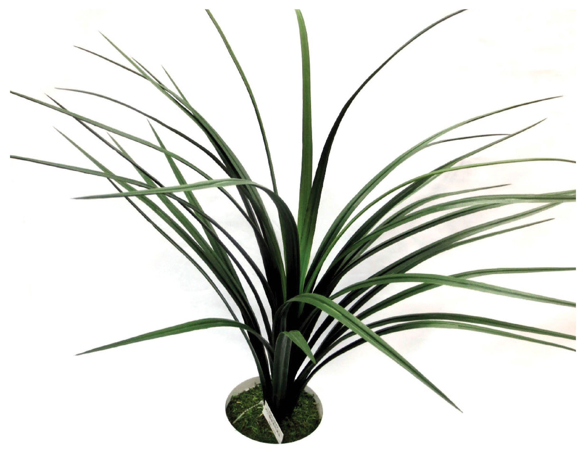 Potted Bromeliad Grass