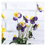Perfect Potted Pansies