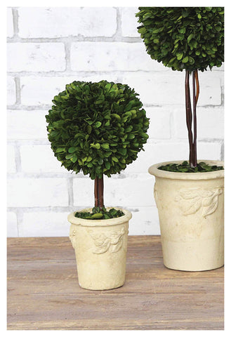 Perfect Potted BOXWOOD Ball Topiaries