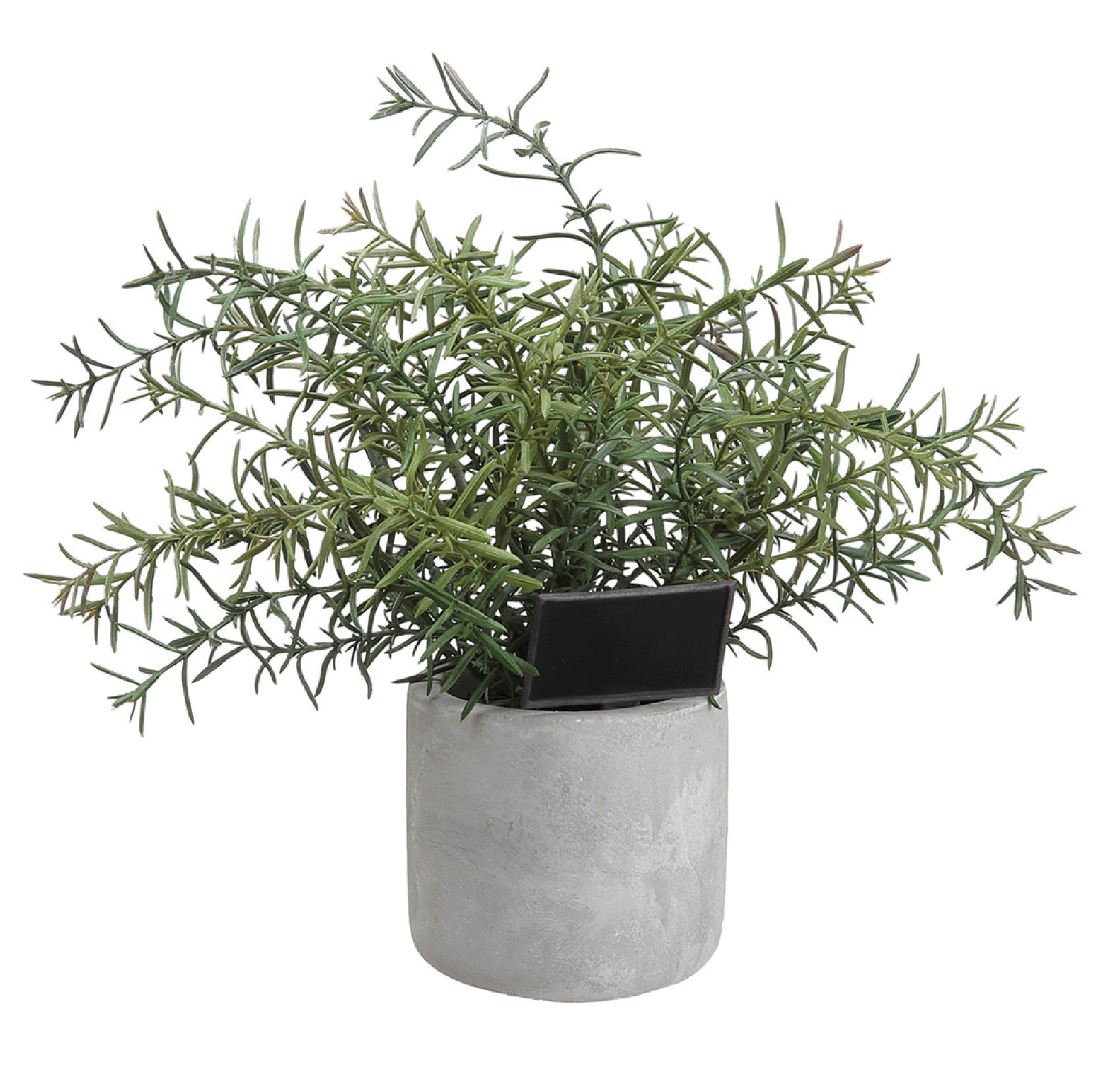 Rosemary in Cement Pot!