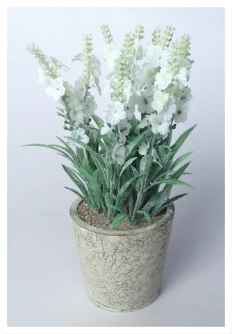 "9"" POTTED White Lavender"