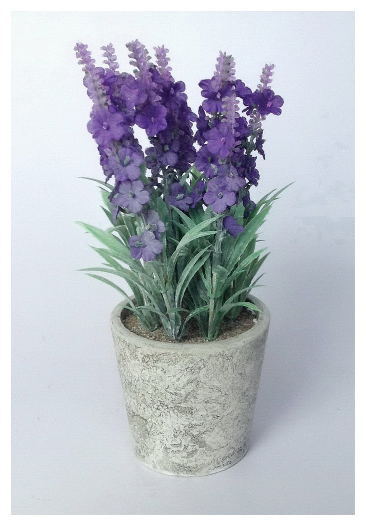 "9"" POTTED Classic Lavender"