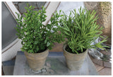 Small Plastic Potted Herbs