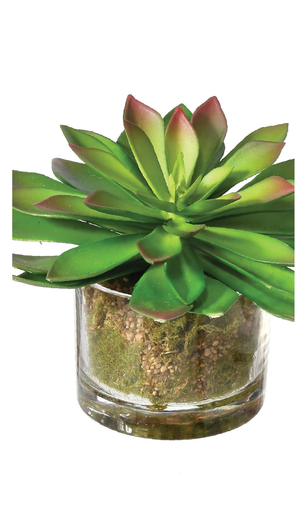 Potted Large Plastic Grapto Succulents