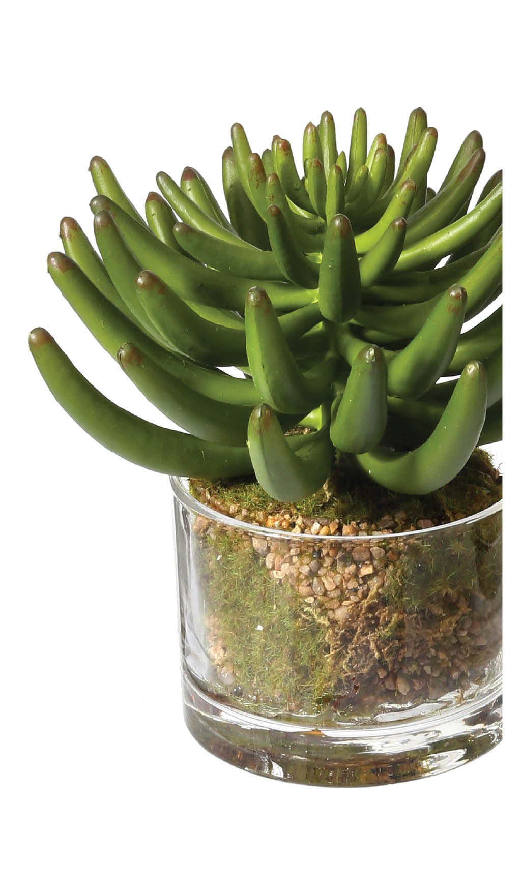 Potted Large Plastic Sedum Succulents