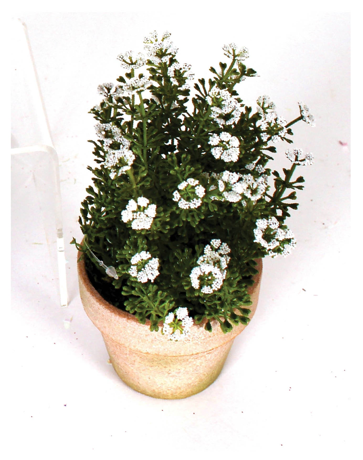 "5""x 7"" Potted Flowering Herbs"