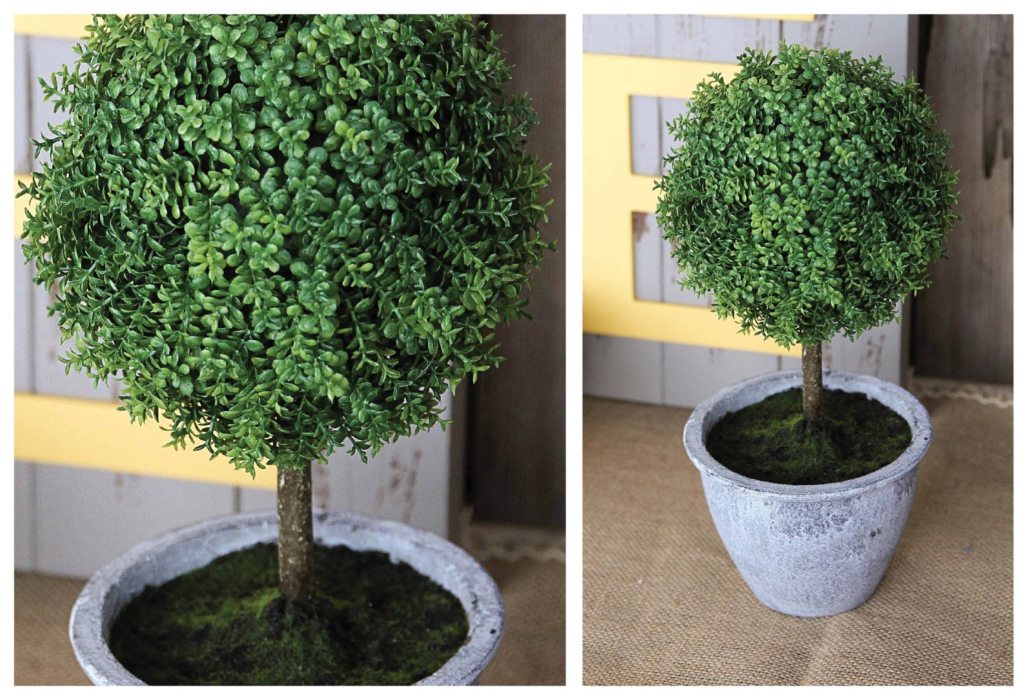 Potted Plastic Dwarf Baby Tear Ball Topiary