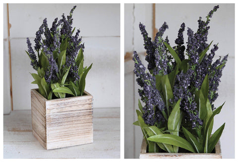 A Lovely Lavender in Wood Container