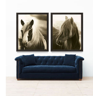 Hyden Horses: Mussed Art Print - Lavender Fields