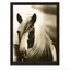 Hyden Horses: Mussed Art Print