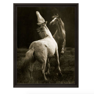 Hyden Horses: Playing Pair Art Print - Lavender Fields