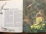 Album of Dinosaurs by Tom McGowen, Illustrated by Rod Ruth, Vintage 1975