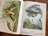 The Birds of America by John James Audubon, Vintage 1977, Hardcover Book with Dust Jacket, Illustrated
