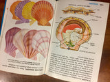 Seashells of the World, A Golden Guide, Hardcover Book, Illustrated