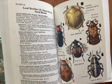Beetles by Richard E. White, Peterson Field Guides, Vintage 1983, 1st Edition, Hardcover Book with Dust Jacket in Mylar