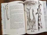 Giraffes, the Sentinels of the Savannas, by Helen Roney Sattler, Illustrated by Christopher Santoro, Vintage 1989, First Edition, Hardcover Book with Dust Jacket
