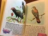 Birds: A Guide to the Most Familiar American Birds, A Golden Nature Guide, Vintage 1956