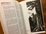 Discovering Sierra Trees by Stephen F. Arno, Illustrated by Jane Gyer, Vintage 1973, Beautifully Illustrated Nature Guide!