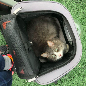 The Humongo Pod - Backpack For Larger Cats